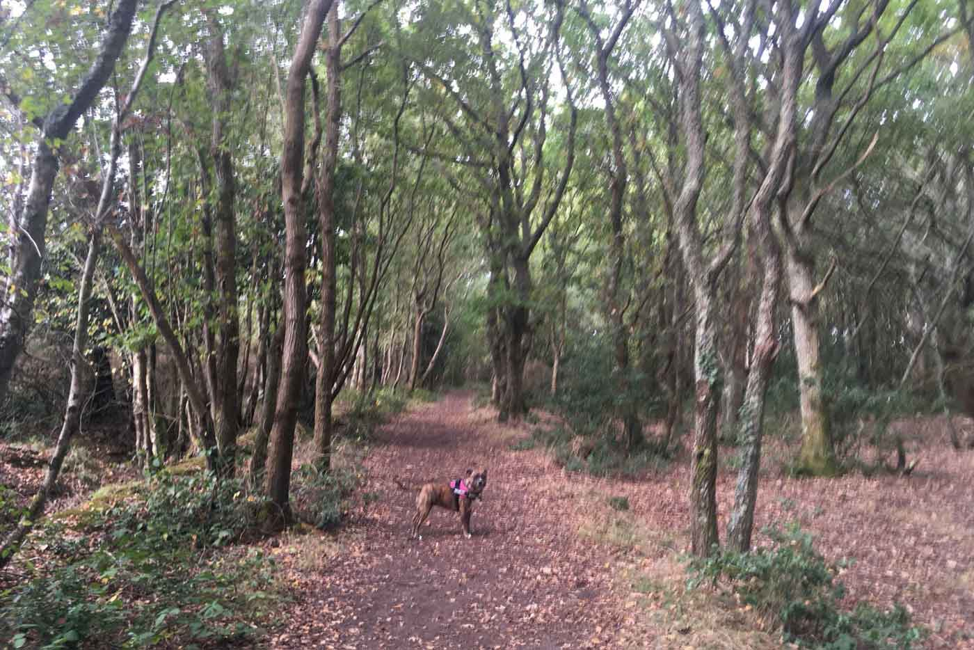 Creekmoor Dog Walking Poole