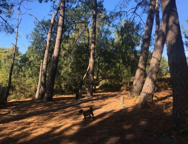 Creekmoor Dog Walking Poole 5