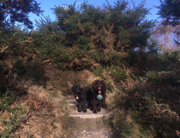 Hamworthy Dog Walking Poole 1