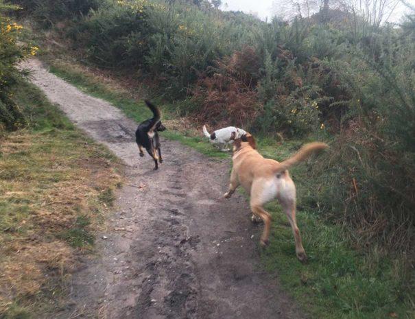 Hamworthy Dog Walking Poole 11