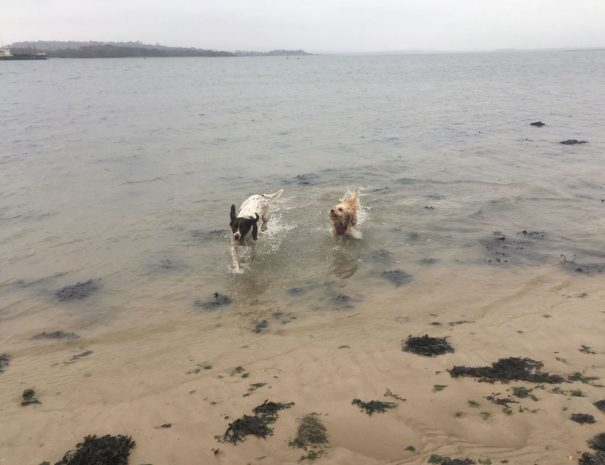 Hamworthy Dog Walking Poole 13