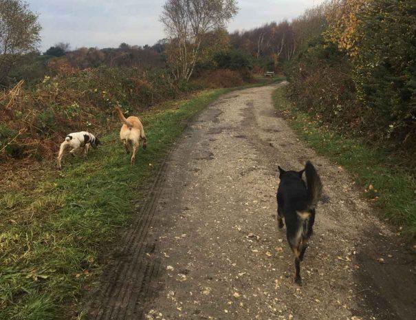 Hamworthy Dog Walking Poole 2