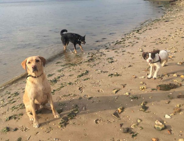 Hamworthy Dog Walking Poole 3