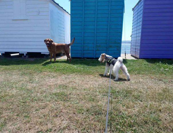 Hamworthy Dog Walking Poole 4