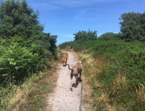 Hamworthy Dog Walking Poole 8