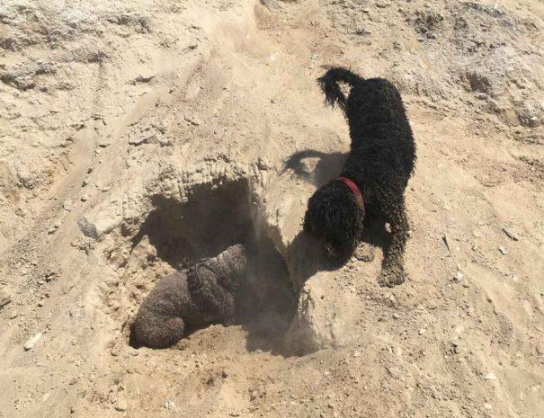 Hamworthy Dog Walking Poole 9