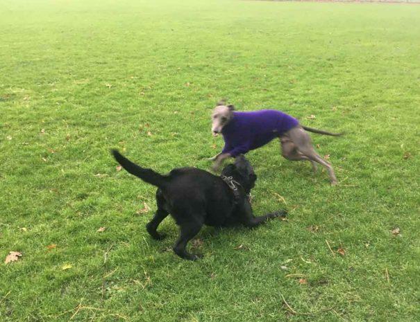 Turlin Moor Rec Dog Walking Poole 2