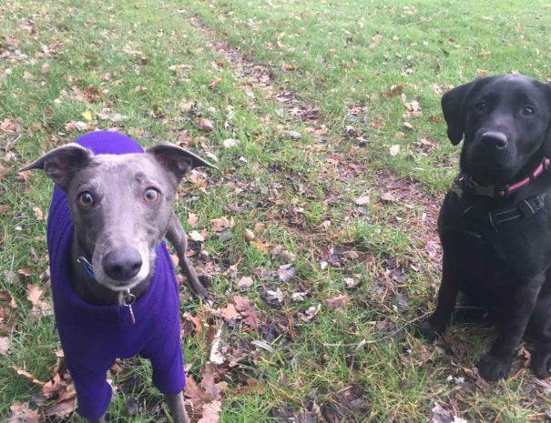 Turlin Moor Rec Dog Walking Poole 3