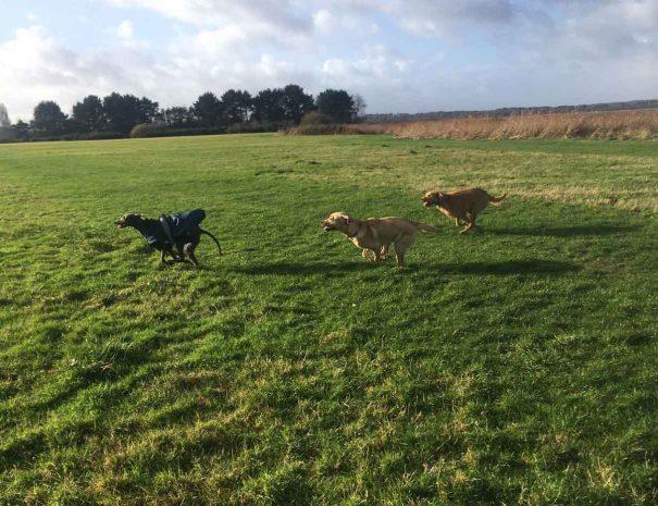 Turlin Moor Rec Dog Walking Poole 5