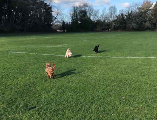 Turlin Moor Rec Dog Walking Poole 6
