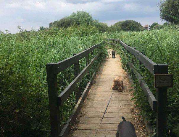 Turlin Moor Rec Dog Walking Poole 7